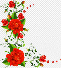 red roses ilration rose flower