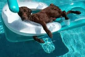 Funny Pics - Dog Days of Summer | D for Dog