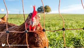 How To Use Electric Poultry Fencing The Ultimate Guide