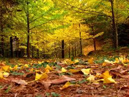 صور اوراق الشجر خلفيات عن فصل الخريف 2017 ميكساتك