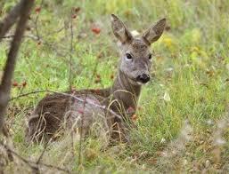 deer resistant garden ideas how to