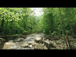 indian forest beautiful video free