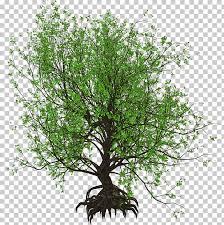 trees for small gardens garden design