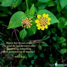 best flowerphotography quotes status shayari poetry thoughts