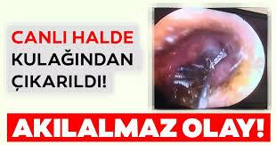 Antalya   Son dakika haberi: Antalya'da şoke eden olay! Kulağından ...