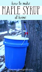 making maple syrup tapping processing