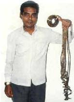 indian world records world s longest nails