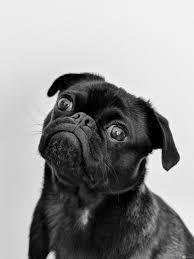 10 صور حيوانات مضحكة وكوميدية جدا مكتوب عليها