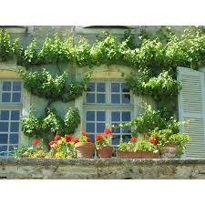 Ebern Designs Auvillar Medieval France Wall Decal Wayfair