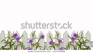 White Picket Fence Border Purple Flowers Stock Photo Edit Now 1121149886