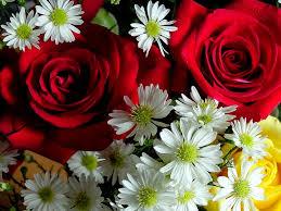 مبيعات خاصة تصميم الخالدة بوتيك المخرج اروع الصور للزهور