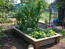 nice raised bed garden design home