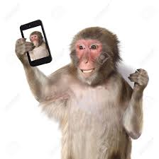 funny monkey taking a selfie and