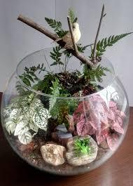 miniature garden in a glass bowl