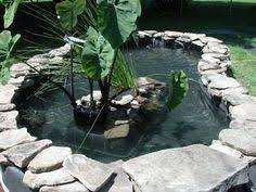 10 Backyard Turtle Pond Ideas In 2020 Turtle Pond Pond Backyard