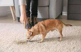 how to remove pet sns on carpets
