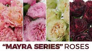 JFTV: Mayra Series Garden Roses with Celine - YouTube