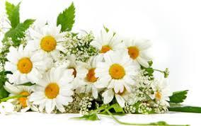 flowers wallpapers free hd
