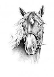 Tekening Paard Stockfoto S Rechtenvrije Tekening Paard