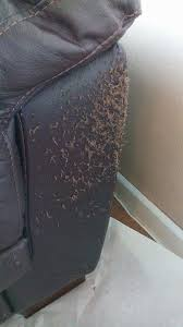 cat scratches diy leather repair
