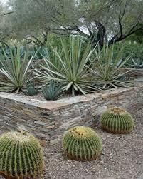 beautifully displayed desert plants