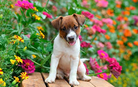 are plants toxic to dogs