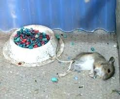 mouse poisons used to kill mice