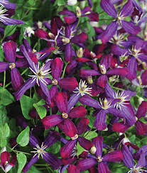 border sun shade perennial plants