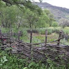 Wattle Fences Weaving Branches Takes Time Yields Rewards Food And Cooking Nwitimes Com