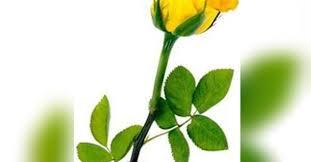 Ada Martin Obituary - Visitation & Funeral Information