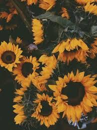 bunga matahari menanam bunga ilustrasi fantasi