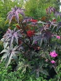 plants that thrive in clay soil