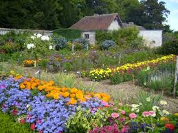 flower garden and seasons flowers that