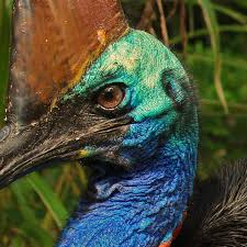 You are right to be scared of cassowaries, but there's a softer ...