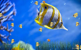 صور سمك زينة Hd احلي خلفيات والوان واشكال سمك الزينة ميكساتك