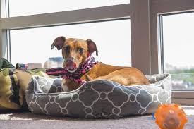 10 Dog Friendly Ideas For Balconies
