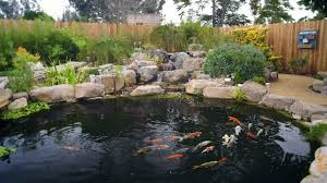 how to build a koi pond diy tips