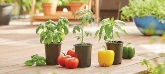 edible gardening at the home depot