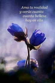 Solo necesitas abrir los ojos y mirar la realidad   Flores azules  Imgenes inspiradoras Flores