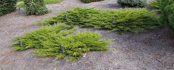 juniper calgary carpet pinelane nursery