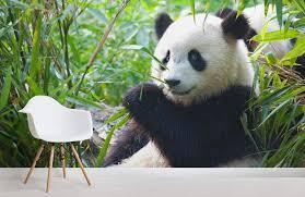 panda bear wallpaper mural murals