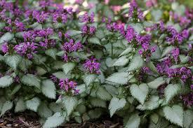 best shade plants for sydney gardens