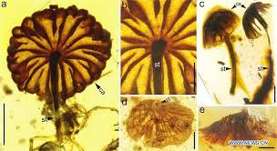 Los científicos encuentran los fósiles de hongos intactos más antiguos
