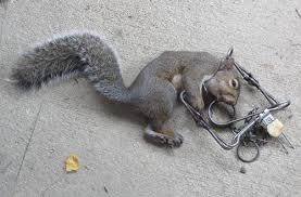 rat trap mods for squirrels 10 2016