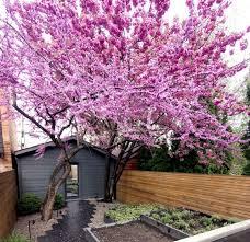 garden design ideas the best trees
