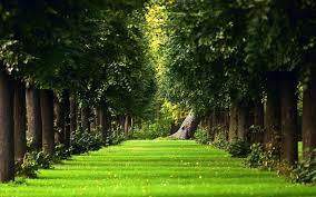 photos nature garden wallpaper hd