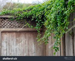 Shrubbery Vines Leaves Branches Growing Over Stock Photo Edit Now 1417785518