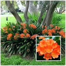 plants for gardens ideas bonellibsd co