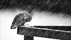 صور حزينة تحت المطر