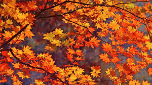 40 fall wallpaper with leaves on